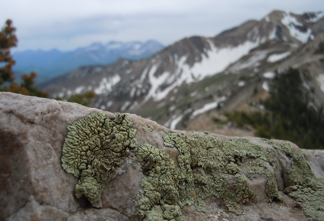 Lichen en route to Mt. Baldy