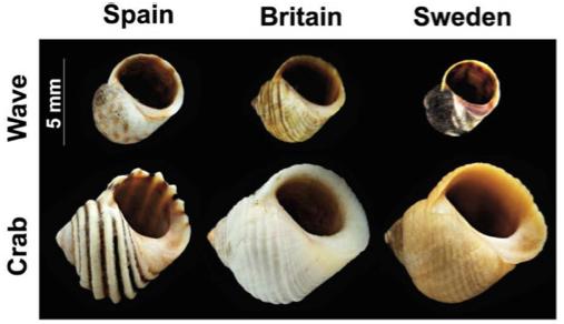 Butlin et al (2014), figure 1B.