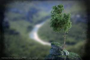 Martime pine. © mdo.emecstudios.com