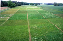 The Park Grass experiment at Rothamsted. © Rothamsted Research