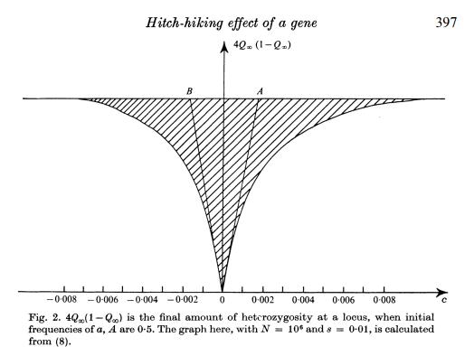 Reduction in heterozygosity at a hitchhiking neutral locus - from a now classic manuscript by Maynard-Smith and Haigh (1974). Image courtesy: http://dx.doi.org/10.1017/S0016672308009579