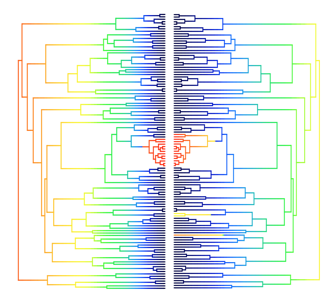 Phylogeny where warmer colors represent faster rates with speciation on the left and trait diversification on the right. Image courtesy of S. Price