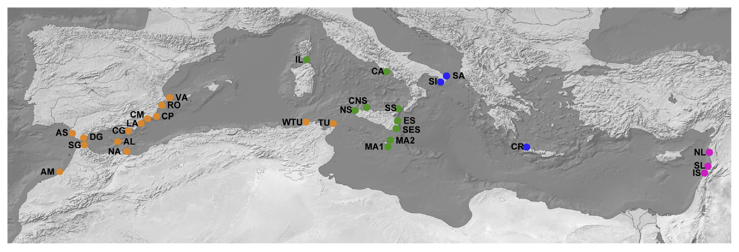 Fig. 1. Sampling localities and distribution of the main lineages identified in Dendropoma petraeum. Locality codes as indicated in Table 1. Colors represent lineages: Western (orange), Tyrrhenian (green), Ionian-Aegean (blue), Levantine (pink).