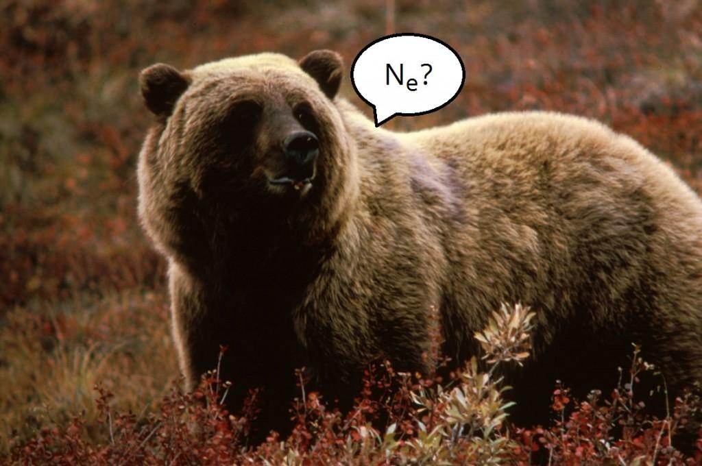 Grizzlybear55Ne