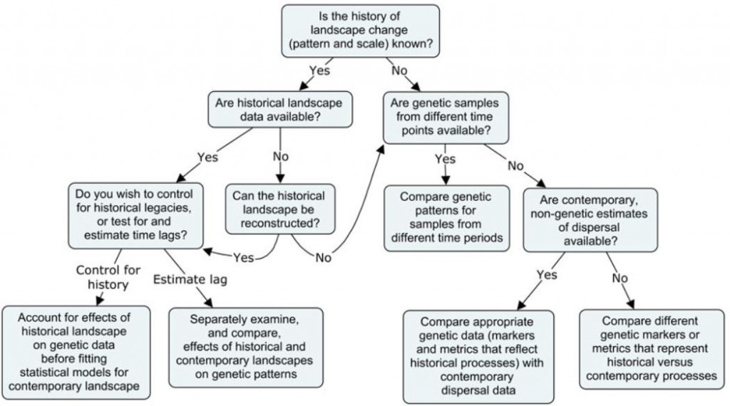 Landscape genetics decision tree provided by Epps and (2015)