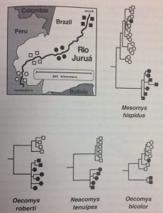 """I reckon the Rio Juruá has something to do with this widespread phylogeographic pattern!"" From Avise (2000)"