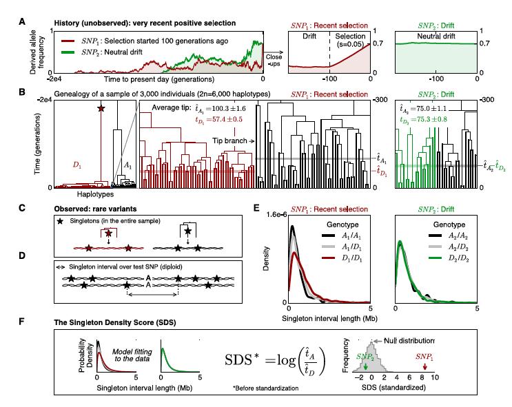 Field et al. 2016, bioRxiv preprint. DOI: http://dx.doi.org/10.1101/052084
