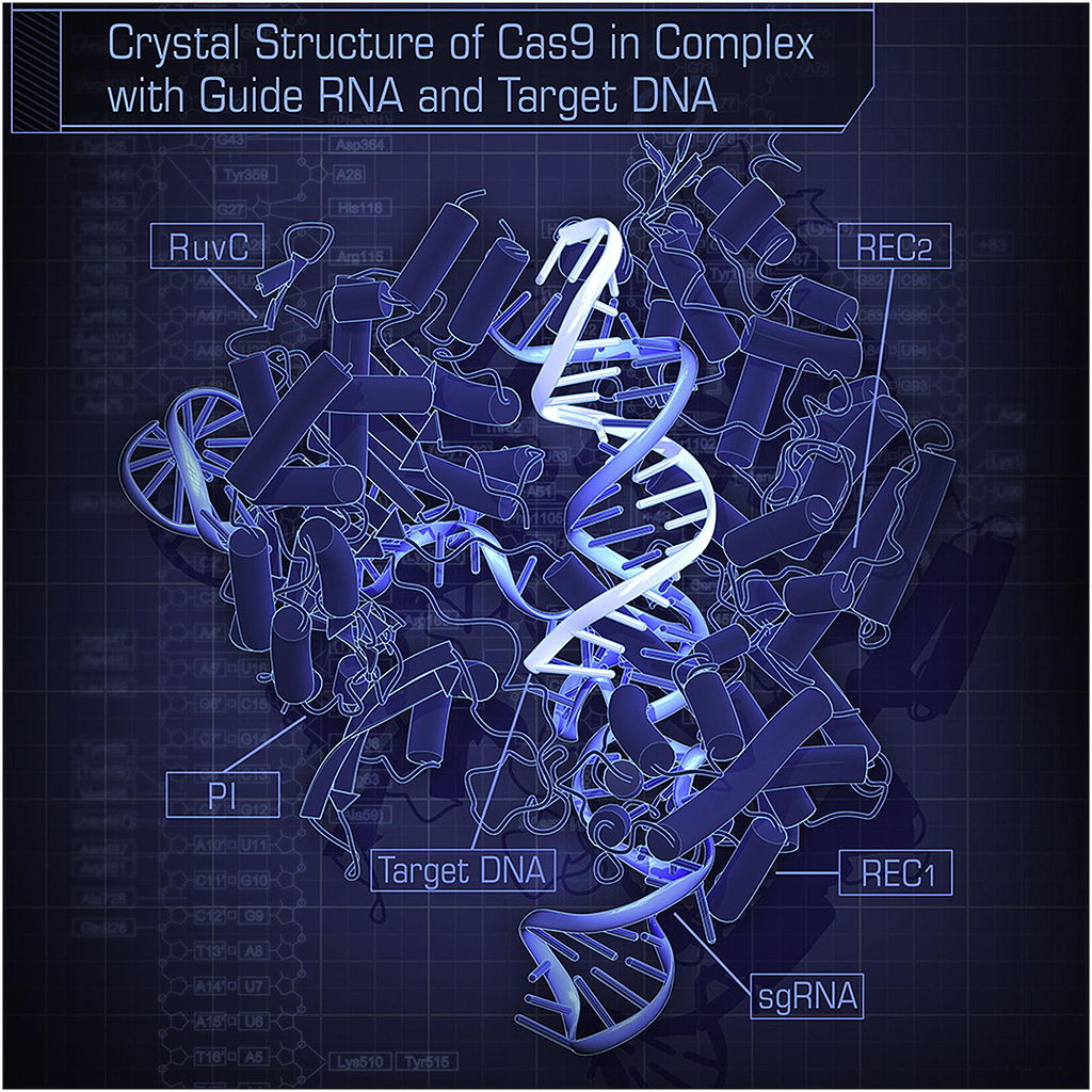 Crystal Structure of Cas9 in Complex with Guide RNA and Target DNA (Nishimasu et al. 2014)
