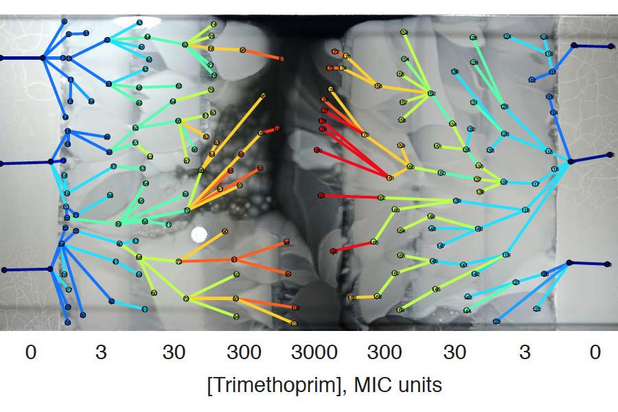 Baym et al., 2016. Supplemental Figure 3A.