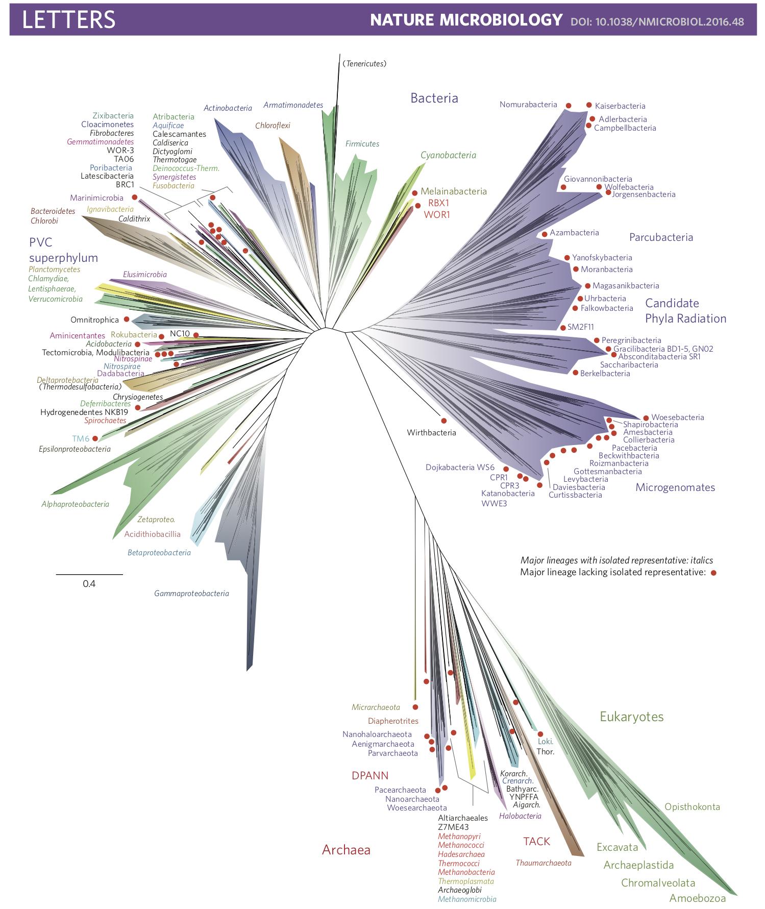 Molecular Genetics Of Bacteria Snyder Pdf